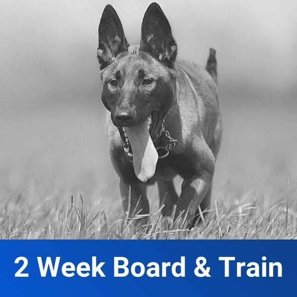 Dog Training Board & Train