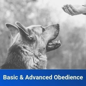Basic & Advanced Obedience Training