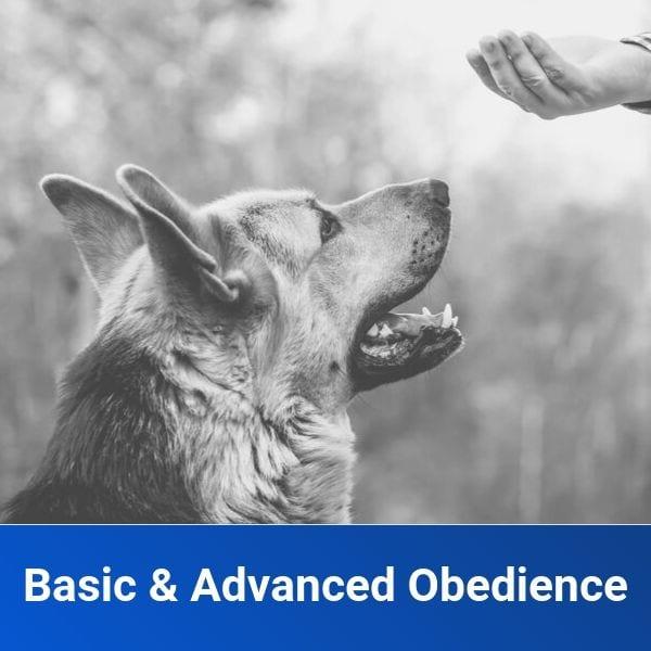 Basic & Advanced Obedience Training