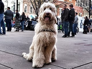 Dog Obedience in Public