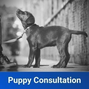 Puppy Consultations