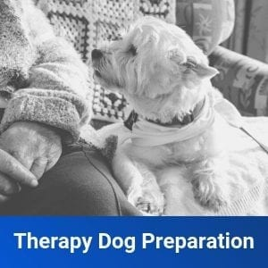 Therapy Dog Development