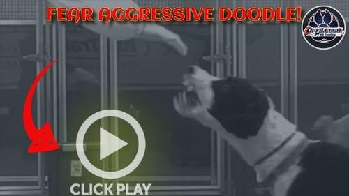 Off Leash K9 Aggressive dogs
