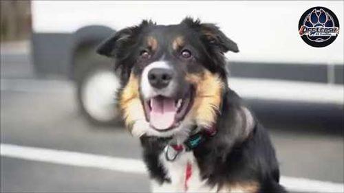 OLK9 YouTube Video - good boy