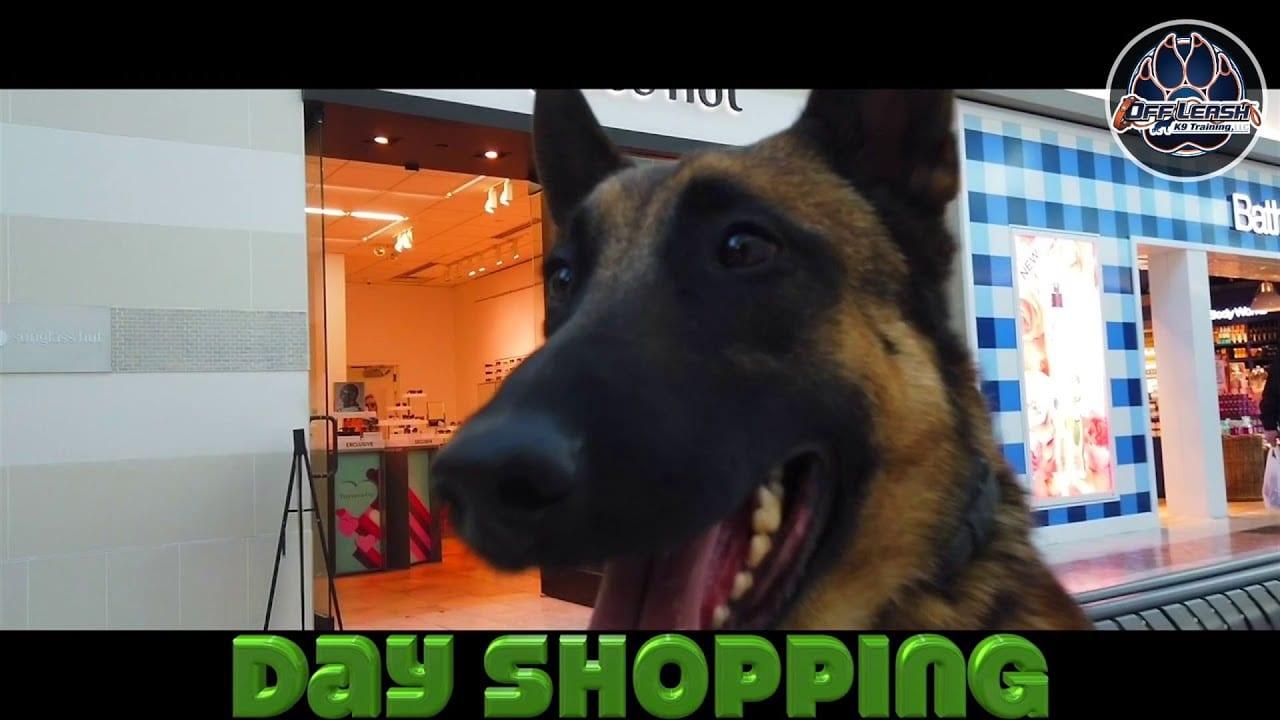 OLK9 YouTube Video - shopping