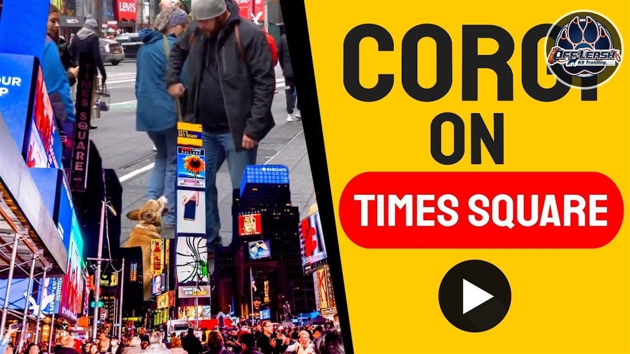 OLK9 YouTube Video - Corso