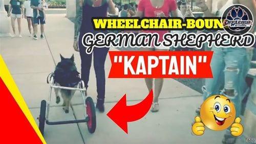 OLK9 YouTube Video - Kaptain