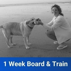 1 Week Board & Train