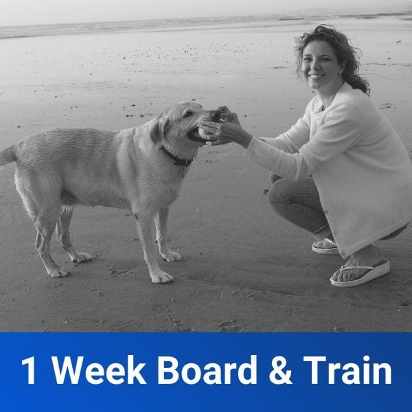 1 Week Board & Train