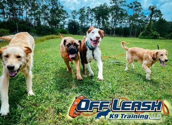 Off Leash K9 Training Dog Experts